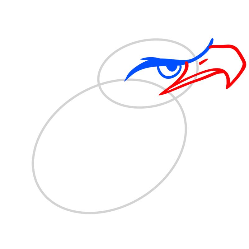 Learn easy to draw Nighty Philadelphia Eagle step 03