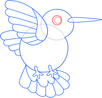 Learn easy to draw colibri step 09