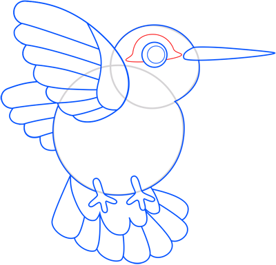Learn easy to draw colibri step 10