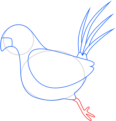 Learn easy to draw pheasant step 06