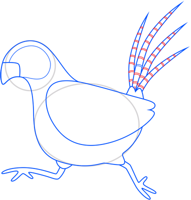 Learn easy to draw pheasant step 09