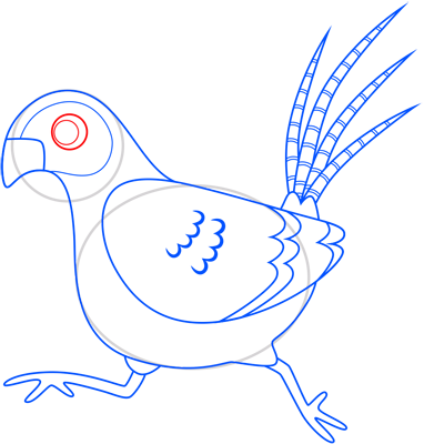 Learn easy to draw pheasant step 12