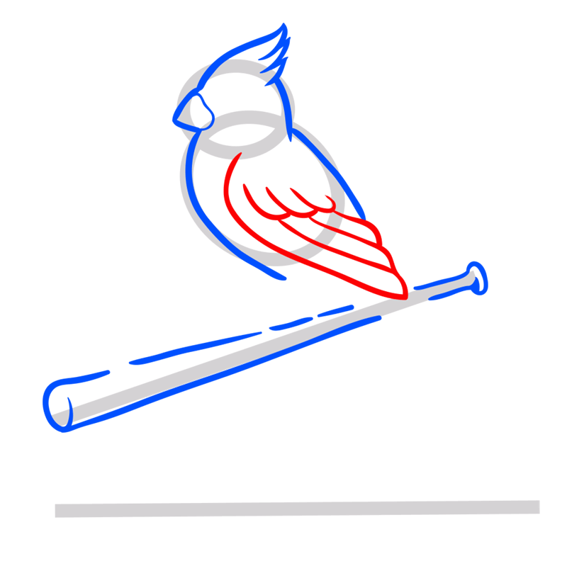 Learn easy to draw st. louis cardinals logo step 05