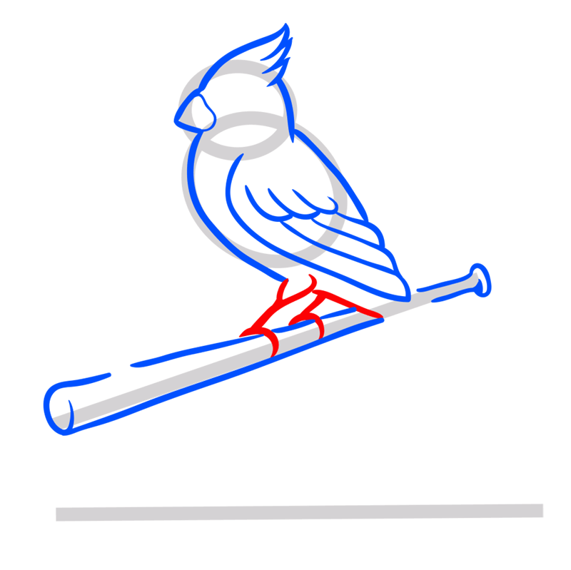 Learn easy to draw st. louis cardinals logo step 06