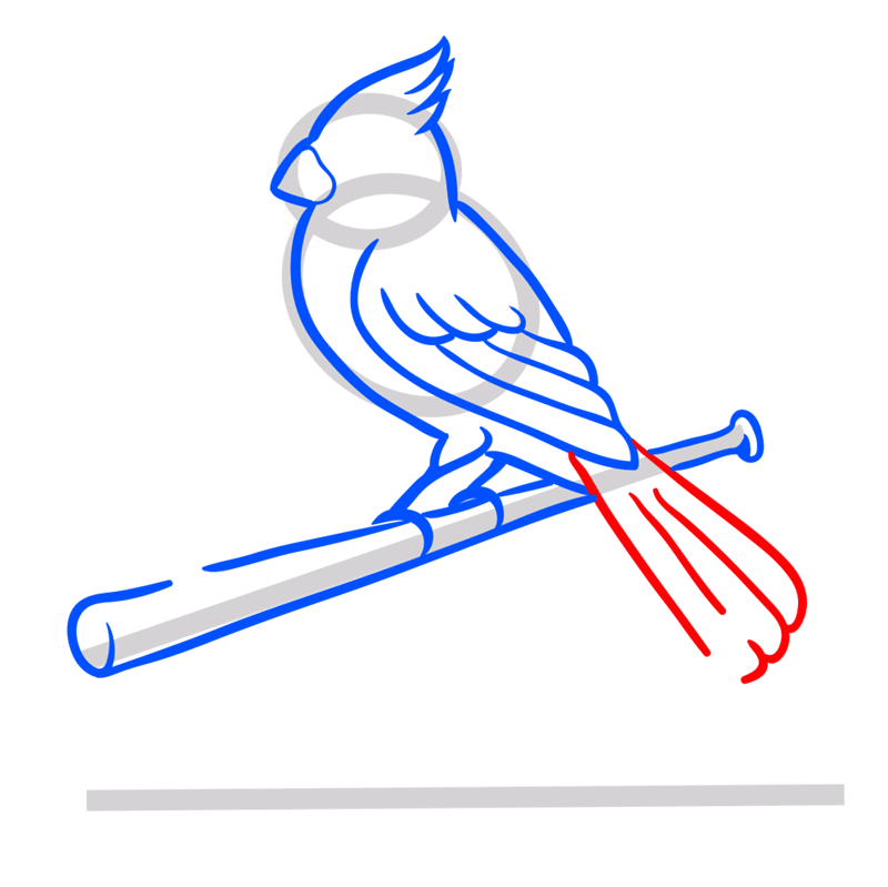 Learn easy to draw st. louis cardinals logo step 07