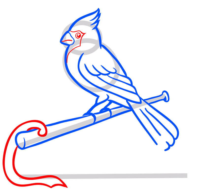 Learn easy to draw st. louis cardinals logo step 08
