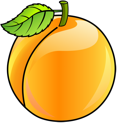 Learn easy to draw how to draw an apricot 13