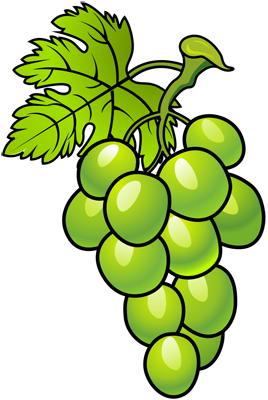 [Fruits and Berries Drawings] How to draw Grapes