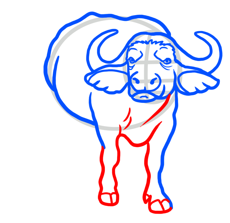 Learn easy to draw how to draw a buffalo drawing 5