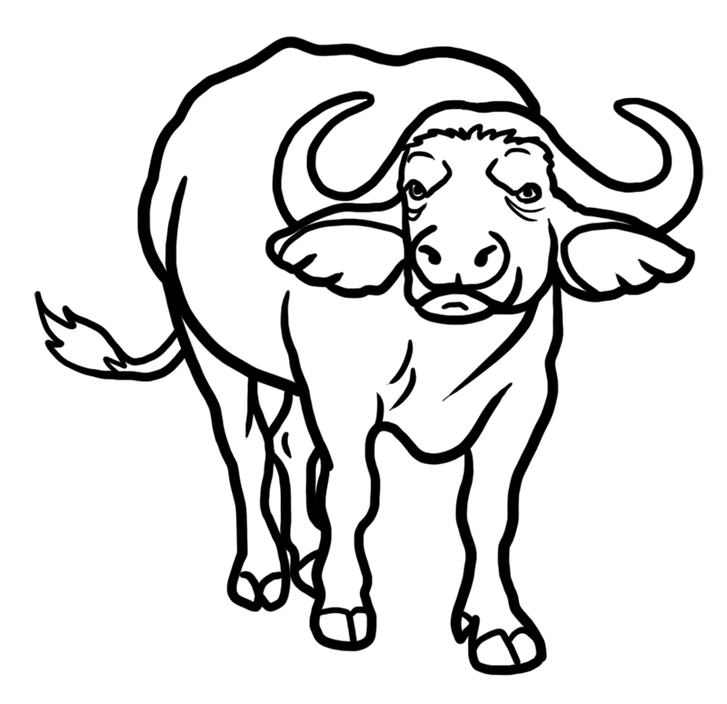 Learn easy to draw how to draw a buffalo drawing 7