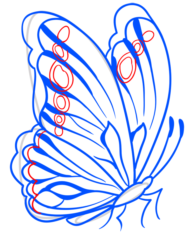 Learn easy to draw how to draw a butterfly line drawing 8