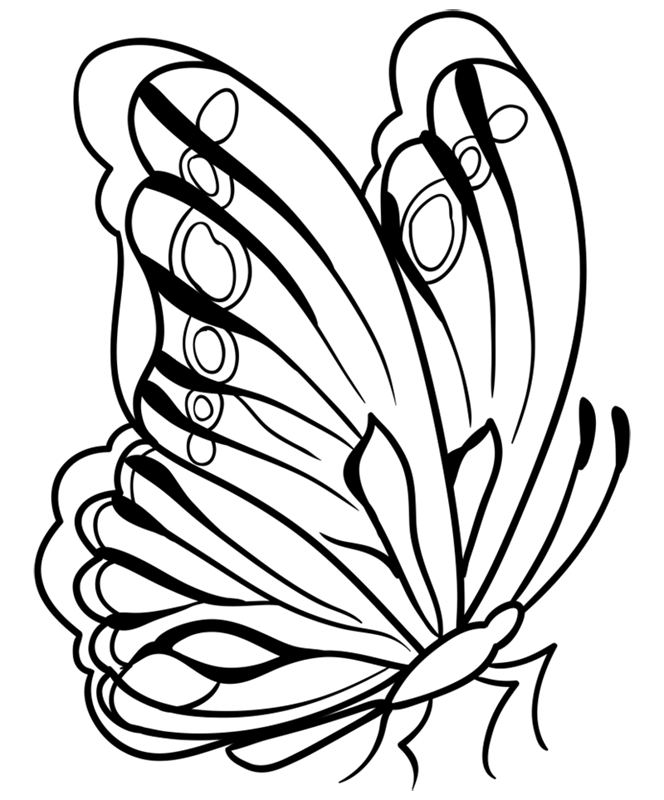 Learn easy to draw how to draw a butterfly line drawing 9