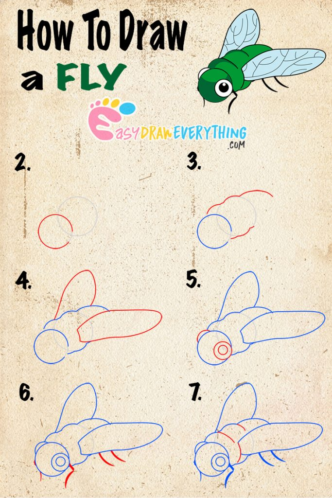 Learn easy to draw how to draw a fly drawing step 00 683x1024