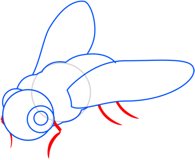 Learn easy to draw how to draw a fly drawing step 06