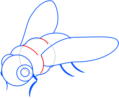 Learn easy to draw how to draw a fly drawing step 07