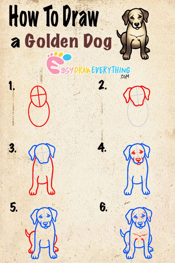 Learn easy to draw how to draw a golden retriever drawing step 00 683x1024