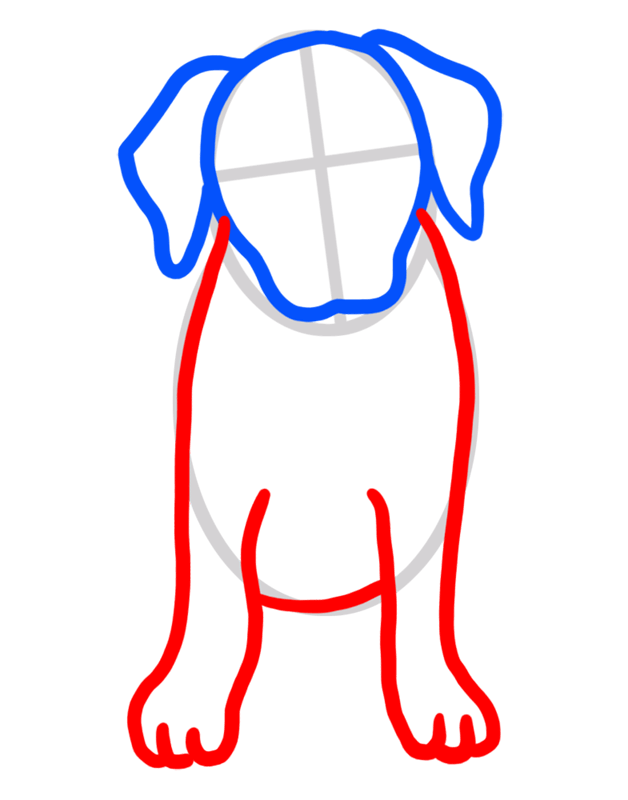 Learn easy to draw how to draw a golden retriever drawing step 03