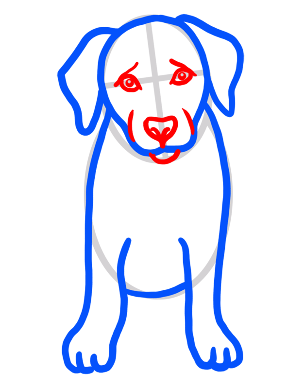 Learn easy to draw how to draw a golden retriever drawing step 04