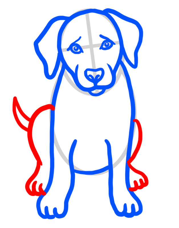 Learn easy to draw how to draw a golden retriever drawing step 05