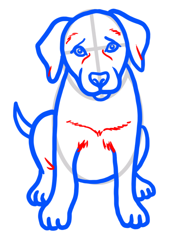 Learn easy to draw how to draw a golden retriever drawing step 06