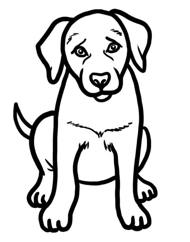 Learn easy to draw how to draw a golden retriever drawing step 07