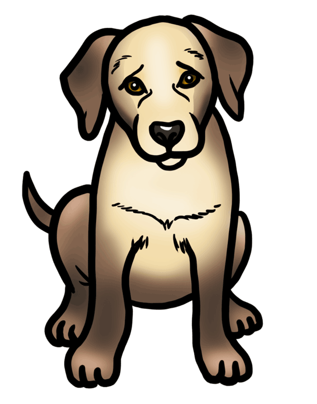 Learn easy to draw how to draw a golden retriever drawing step 08